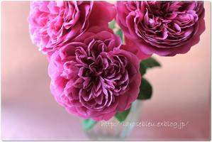 'ヘクトル'が次々咲いて - La rose 薔薇の庭