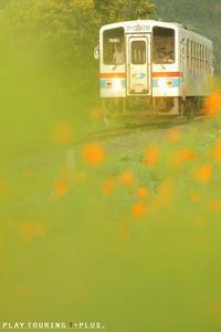 花のある道 - PTT+.