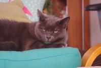 今年も元気に - 『ココんちの (3+1)+(1+1+1) 猫と一犬のたわごと』 6 Pitchouns et 2 Pitchounettes