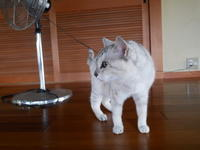 G3スタート、「人生勘違い」 - ご機嫌元氣 猫の森公式ブログ