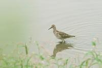 干潟の鳥たち達・・! - さすらいの写遊人