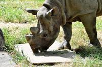 2017年9月 天王寺動物園 その1 初めましてのゲンくんと再会ライくん - ハープの徒然草