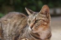 チビ(野良) - ネコと裏山日記