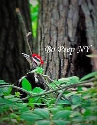 野鳥観察に適した季節 - NYからこんにちは