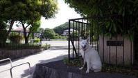 Vol.1233 上倉田第二公園 - 小太郎の白っぽい世界
