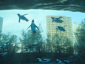 サンシャイン水族館 -
