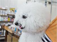 ドッグデンタルケアイベント! - SUPER DOGS blog
