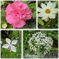 庭の花頑張ってます(*^_^*) - はりねずみの日記帳