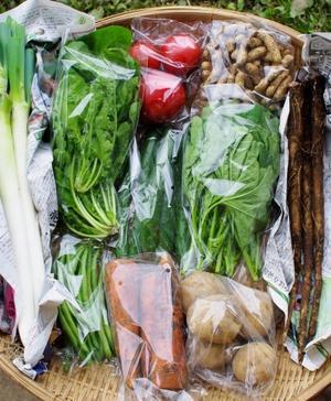 今週の野菜セット(9/12~9/16着) - キシノウエンの 今日のてしごと