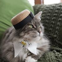 ルナも麦藁のお帽子被ってみたにゃ! - 愛しき猫にゃん♪