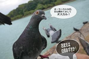 明石公園2017.09.11おはようオスカル -