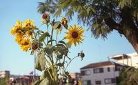 automne - alors  photos ライカと50mmで