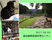 徳島動物愛護管理センター - AMO*PETS アーモペッツ