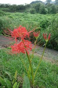 秋を感じに箱根明神ヶ岳へ その3 - 季節(いま)を求めて