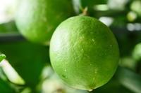 ベランダのレモン - シャドーボックス作品集