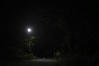 sakura(4cut) 秋田の夜 -     ~風に乗って~    Present