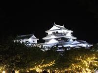 夜の松山城 - 花