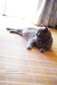 ココと再会☆ - jumhina biyori*