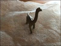 進化論的「動物とわたし」 - あずきのばあばの、のんびり日記
