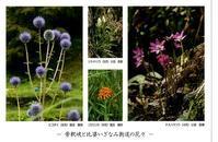 写真展 - Mag's DiaryⅢ