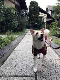 小布施の町歩き - Kokiary@ のどかへつなぐ happy days
