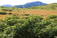 白山 ナナカマドの赤い実 - 白山に魅せられて