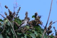 探鳥会に参加しました - poiyoの野鳥を探しに