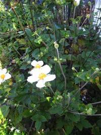 雨あがりの庭は・・・ - 花の自由旋律