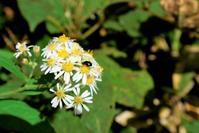 小花と虫たち - ホンマ!気楽おっさんの蓼科偶感
