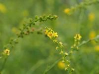 長野で見た花 - 鹿深の森