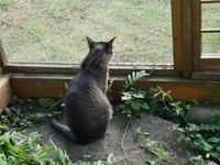 特別講義GO - ご機嫌元氣 猫の森公式ブログ