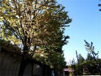 週末の天気と気温(9月3週目) - 北軽井沢スウィートグラス