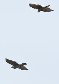 昨日も上空に - 写写衛門