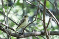 証拠写真 - 趣味の野鳥撮影