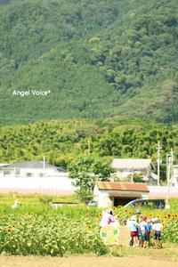 学習 - Angel Voice*