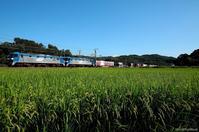 初秋の重連貨物。 - 山陽路を往く列車たち