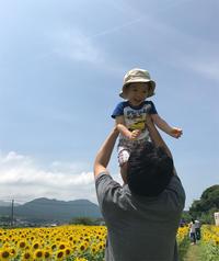 sakuとひまわり2017 - みすみたてあきのブログ