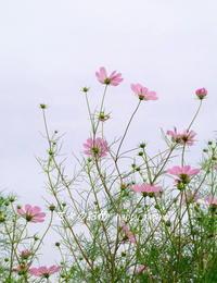 散歩道 - 花々の記憶