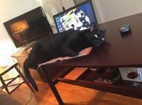 猫とリビングルーム - にゃんこと暮らす・アメリカ・アパート