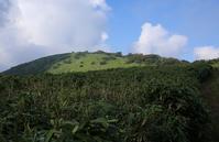 竜ヶ岳山頂は雲の中・・「秋」 - ヤッホー!今日はどちらへ?