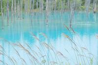 青い池をバックに@北海道 - カメラをもってふらふらと