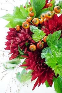 ダリア熱唱とローズヒップのブーケ - お花に囲まれて