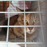 しょうぶ目が離せません / 愛護センター断る / ガリガリのサビ捕獲 - ゆきももこの猫夢日記