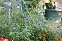 秋の庭 - マミィの花と手づくりの時間