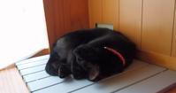 爽やかな朝 - 黒猫瓦版