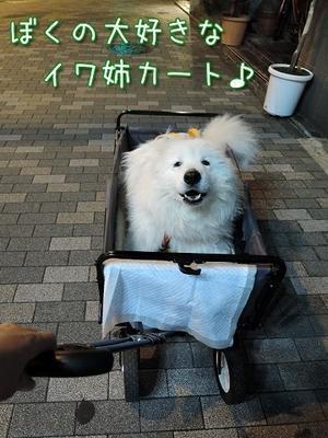 イワ姉ごめーん! - サモエド クローカのお気楽日記