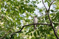 思わぬ出合い‥ - 趣味の野鳥撮影