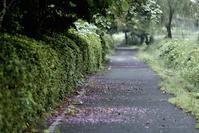 葛の花こぼれる小道 @ 水上池 - 東大寺が大好き