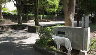 Vol.1235 西神大寺公園 - 小太郎の白っぽい世界
