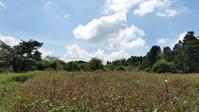 白露の草花 - 富士のふもとの農業日誌